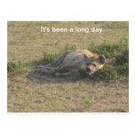 Hyena africano postal