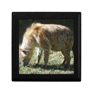 Hyena Caja De Recuerdo