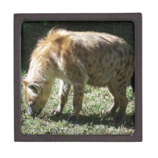 Hyena Caja De Joyas De Calidad