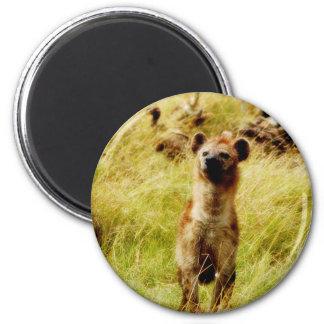Hyena con el imán del wildebeest (gnu)