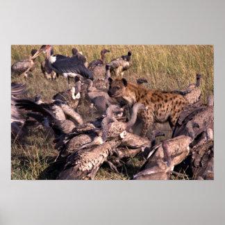 Hyena en el medio de buitres póster