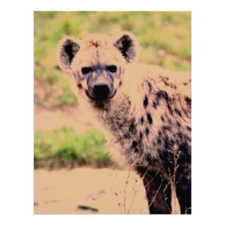 hyena letterhead