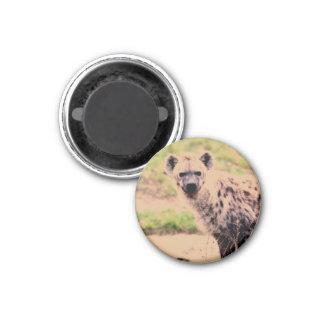 hyena 1 inch round magnet
