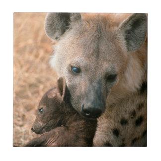 Hyena manchado (Crocuta del Crocuta) con el Azulejo Cuadrado Pequeño
