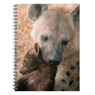 Hyena manchado (Crocuta del Crocuta) con el Libreta