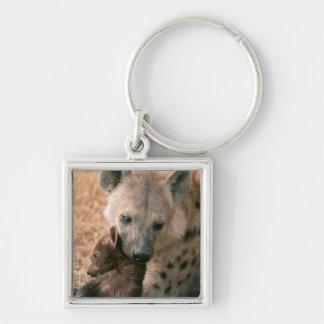 Hyena manchado (Crocuta del Crocuta) con el Llavero Cuadrado Plateado