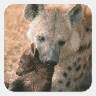 Hyena manchado (Crocuta del Crocuta) con el Pegatina Cuadrada