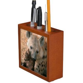 Hyena manchado (Crocuta del Crocuta) con el Portalápices
