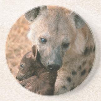 Hyena manchado (Crocuta del Crocuta) con el Posavaso Para Bebida