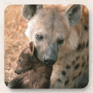 Hyena manchado (Crocuta del Crocuta) con el Posavasos De Bebidas
