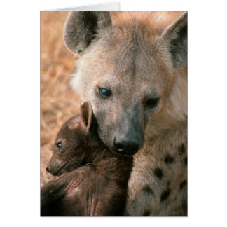 Hyena manchado (Crocuta del Crocuta) con el Tarjeta De Felicitación