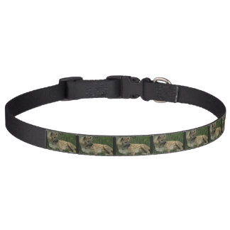 Hyena Pet Collar