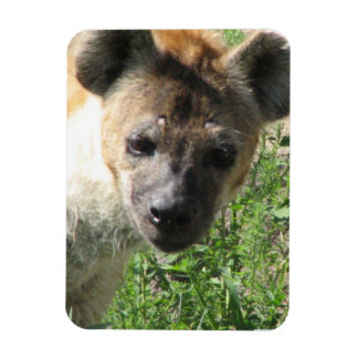 Hyena Photo  Premium Magnet