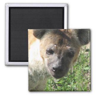 Hyena Photo  Square Magnet
