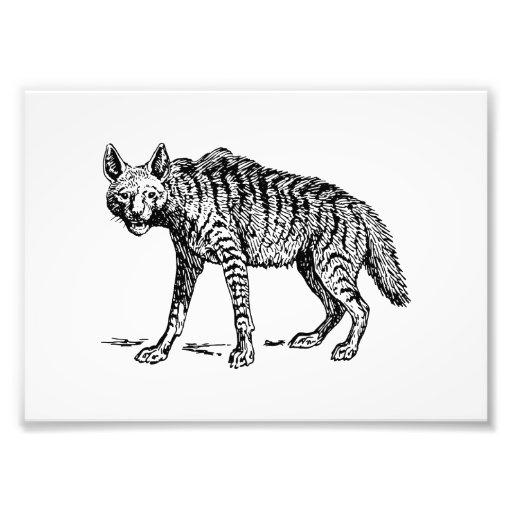 Hyena Fotografías