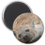 Hyena Picture Magnet Refrigerator Magnets
