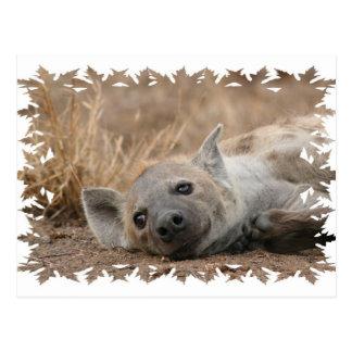 Hyena Picture Postcard