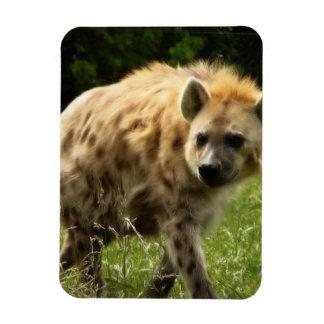 Hyena Premium Magnet