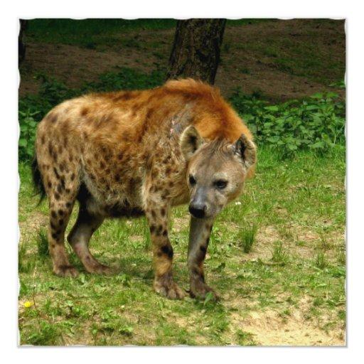 Hyena Prowl Invitation