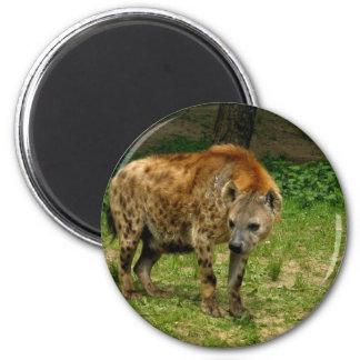 Hyena Prowl Magnet