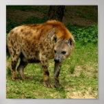 Hyena Prowl Poster Print
