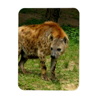 Hyena Prowl Premium Magnet