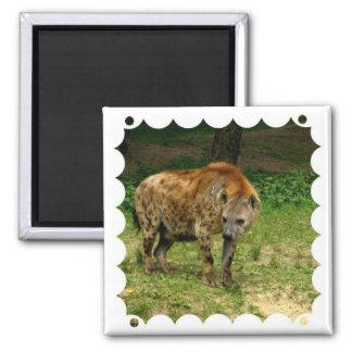 Hyena Prowl Square Magnet