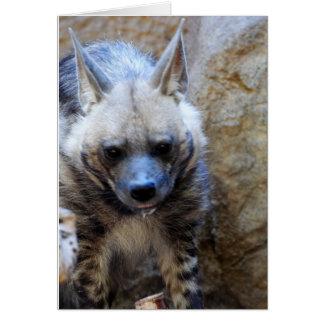 Hyena Sleep Card
