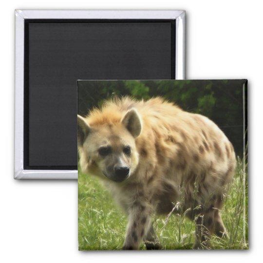 Hyena Square Magnet