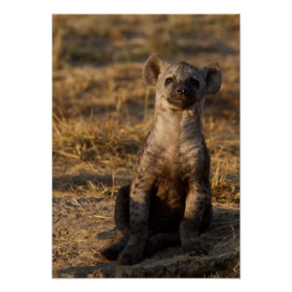 Hyena Youth Poster