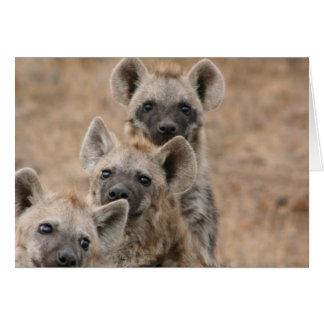 Hyenas Greeting Card