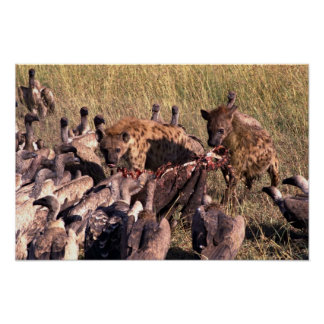 Hyena's prey with vultures poster