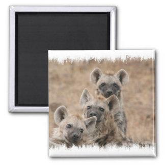 Hyenas Square Magnet
