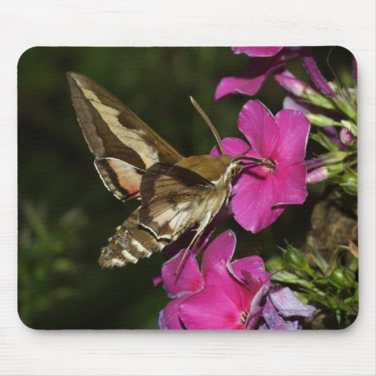 Hyles gallii mouse pad