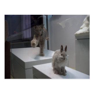 Hyper Lynx runs (a)cross-hare Postcard