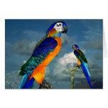 HYPER PARROTS / BLUE ARA GREETING CARD