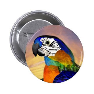 HYPER PARROTS /RED AND BLUE ARA PINBACK BUTTON