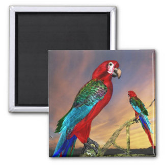 HYPER PARROTS / RED ARA 2 INCH SQUARE MAGNET