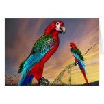 HYPER PARROTS / RED ARA GREETING CARD