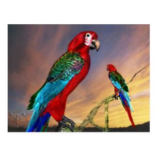 HYPER PARROTS / RED ARA POST CARDS