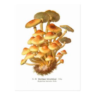 Hypholoma fasciculare post card