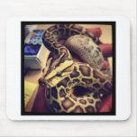 Hypo baby burmese python photo design. mousemats