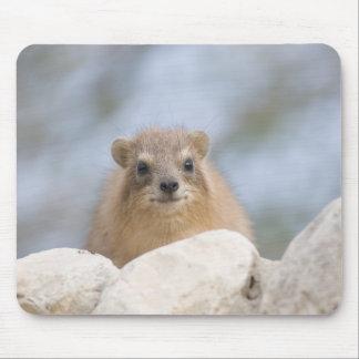 Hyrax - conejo de roca israelí mousepad