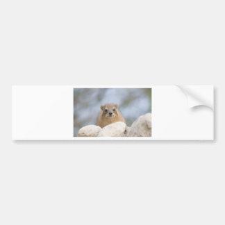 Hyrax - conejo de roca israelí pegatina para auto