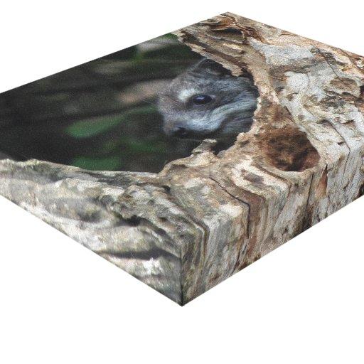 Hyrax del árbol impresiones en lona estiradas