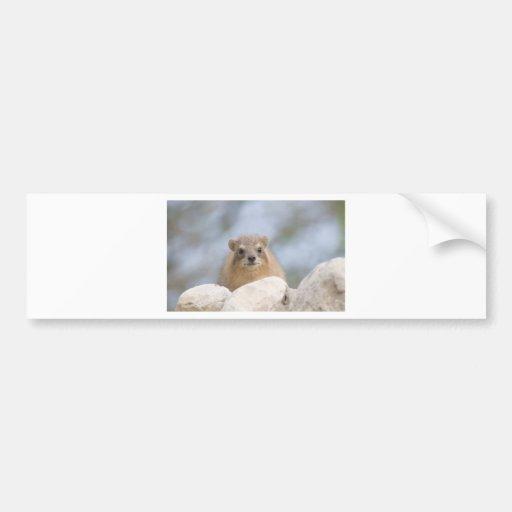 Hyrax - Israeli rock rabbit Car Bumper Sticker