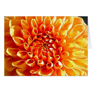 I Adore Dahlias, My Dear Darling Card