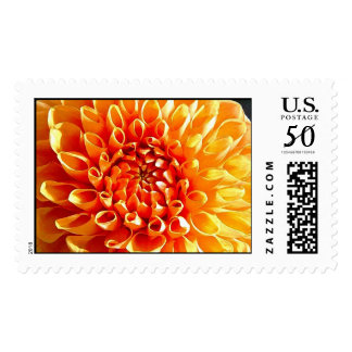 I Adore Dahlias, My Dear Darling. Postage