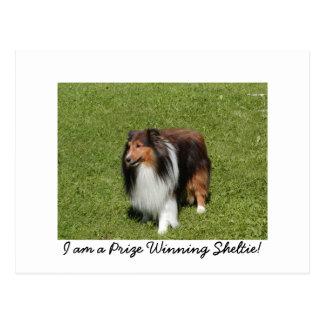 I am a Prize Winning Sheltie! Postcards