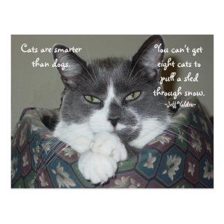 I Am Cat... Postcard